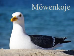 Bild: FeWo Möwenkoje Strandlage Cuxhaven Duhnen Hunde & Kinder willkommen